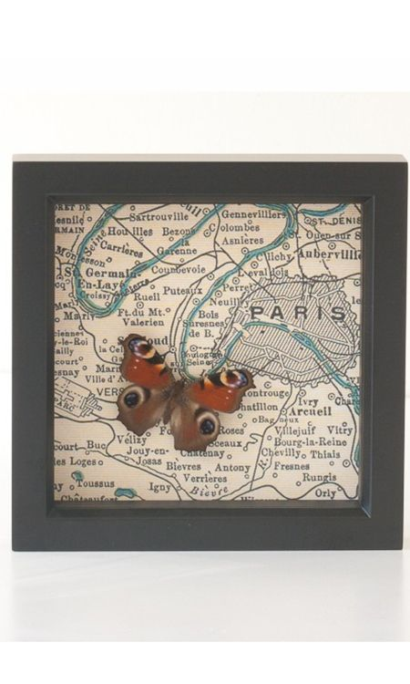 Butterfly on Paris Map Under Glass