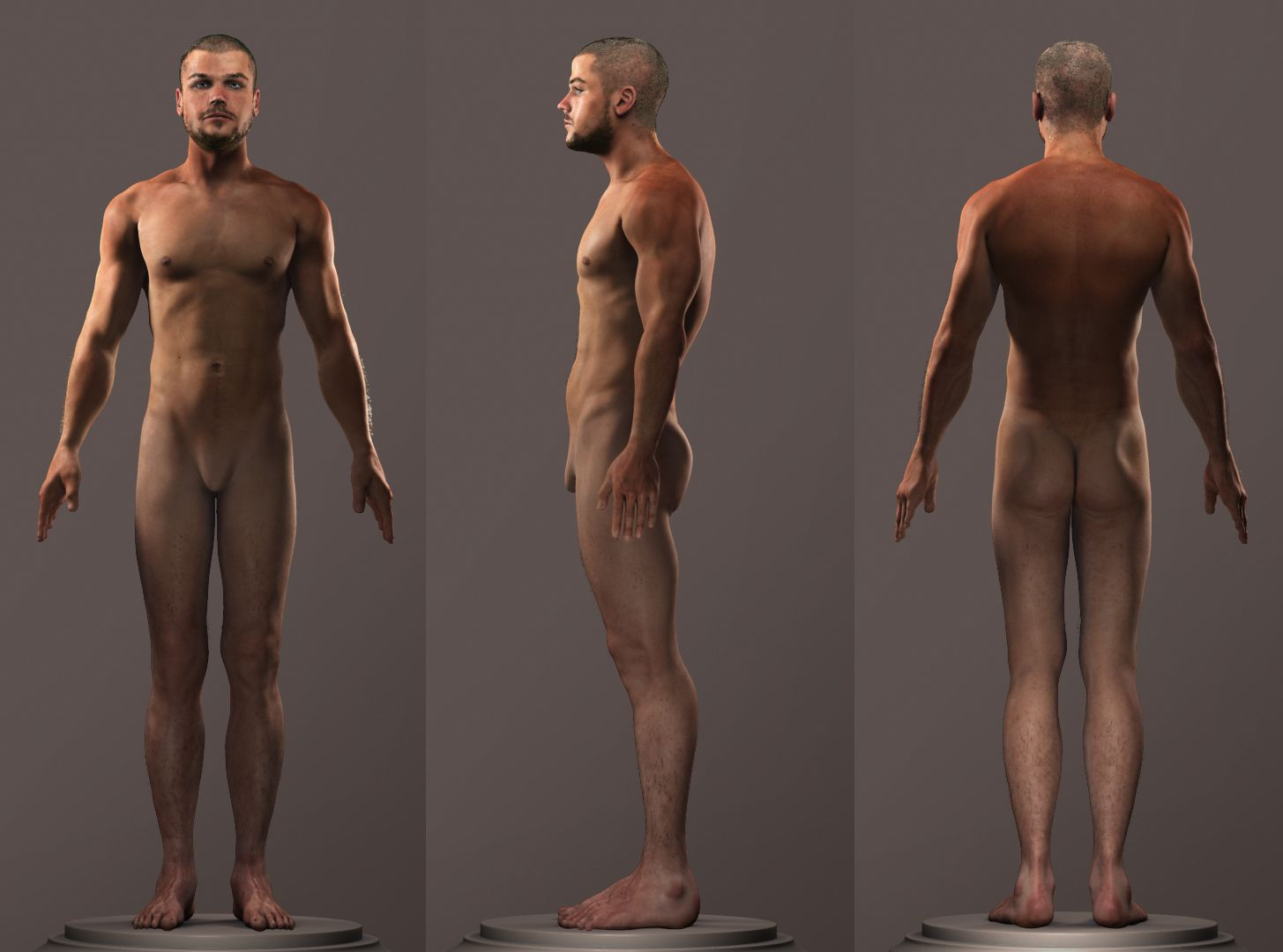Male Front Side Back Tonys Idea Dump Male Anatomy Anatomy For