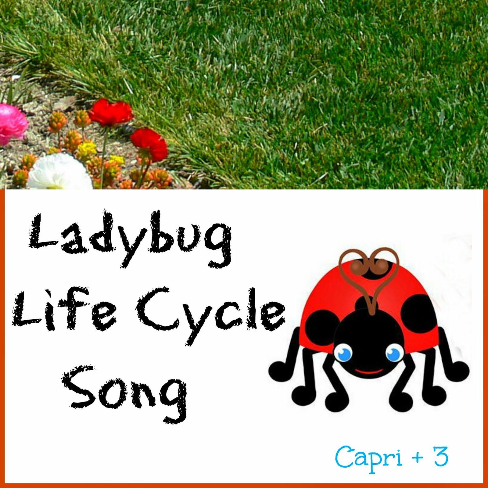 Ladybug Life Cycle Song Lyrics To The Tune Of The Wheels