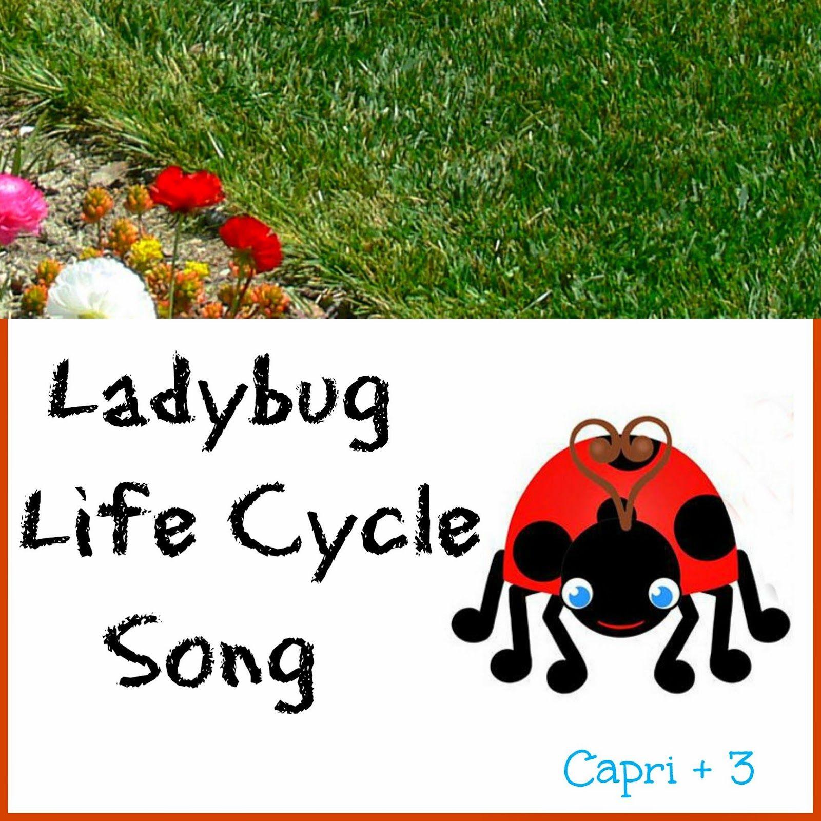 Ladybug Life Cycle Song Lyrics To The Tune Of The Wheels