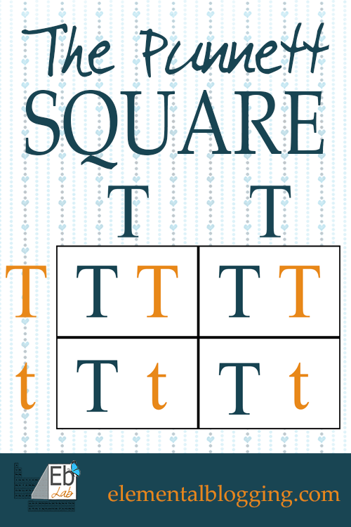 The Square {FREE Printable Included} Science