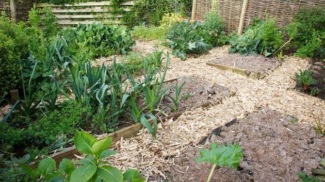 Proti škodcom môžete zabojovať aj rastlinami.