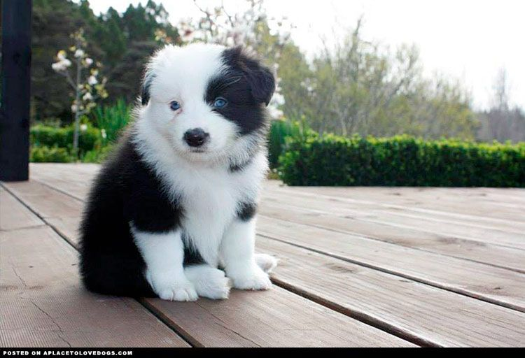 Sweet Little Puppy ::: Visit our poster store Rover99.com