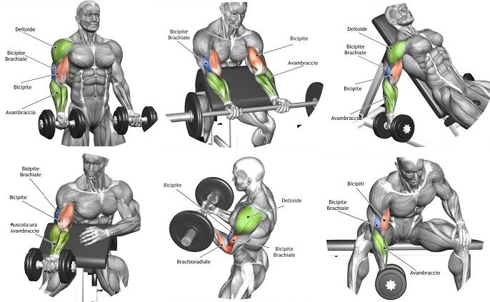 The Best Bicep Workout Program To Ensure Biggest Biceps