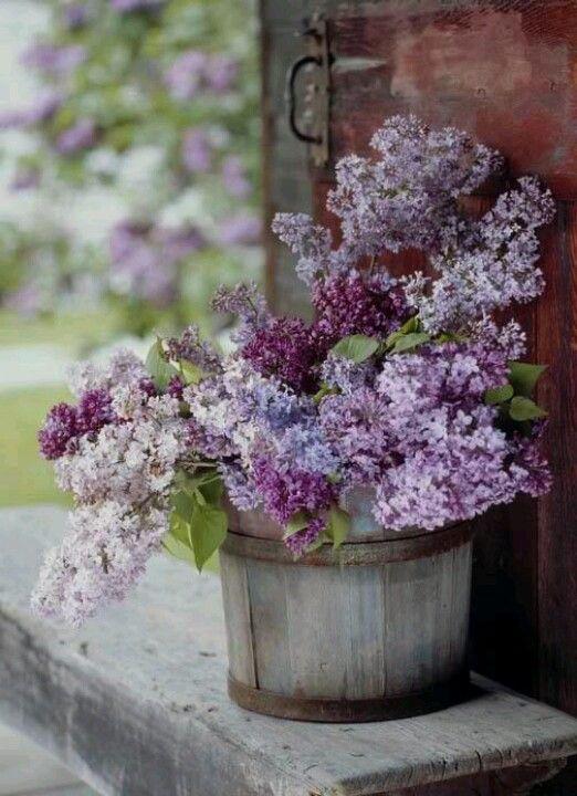 Country Porch Beautiful Flowers Love Flowers Flower Garden