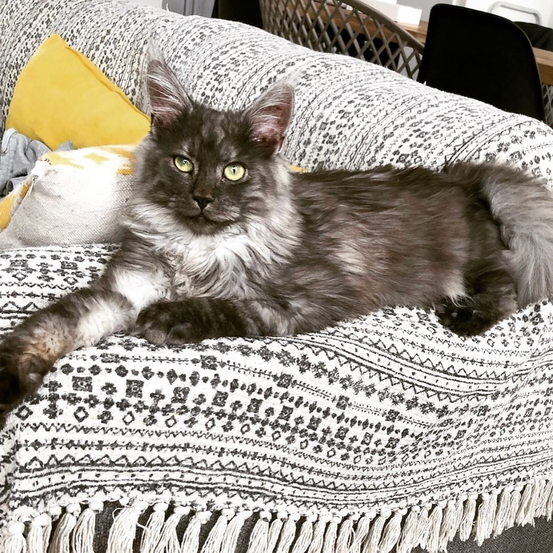 If Love Cats Or You Are A Cat Owner You Have To Follow Me I Share Some Thing About Cats Every Day Cat Cats Catsofinstagram Cute Cats Cat Day Kitten Love