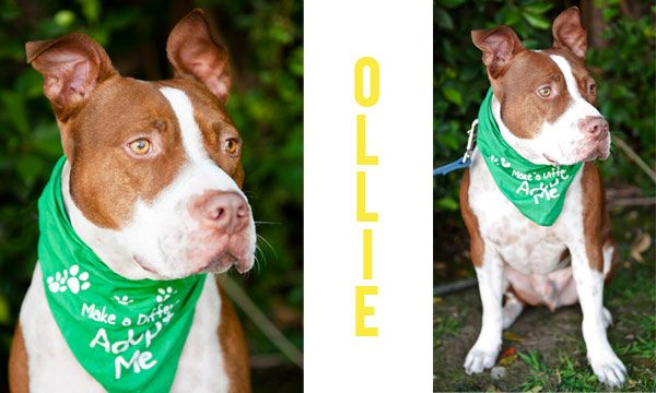 Karma Rescue Dog Tags Dogs Pitbulls