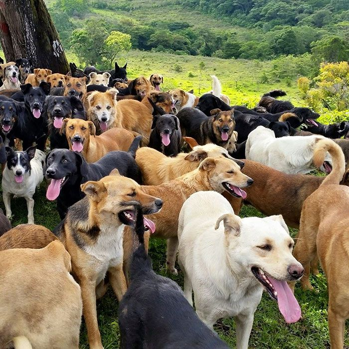 Land Of The Strays In Costa Rica Is Heaven For Dog Lovers World