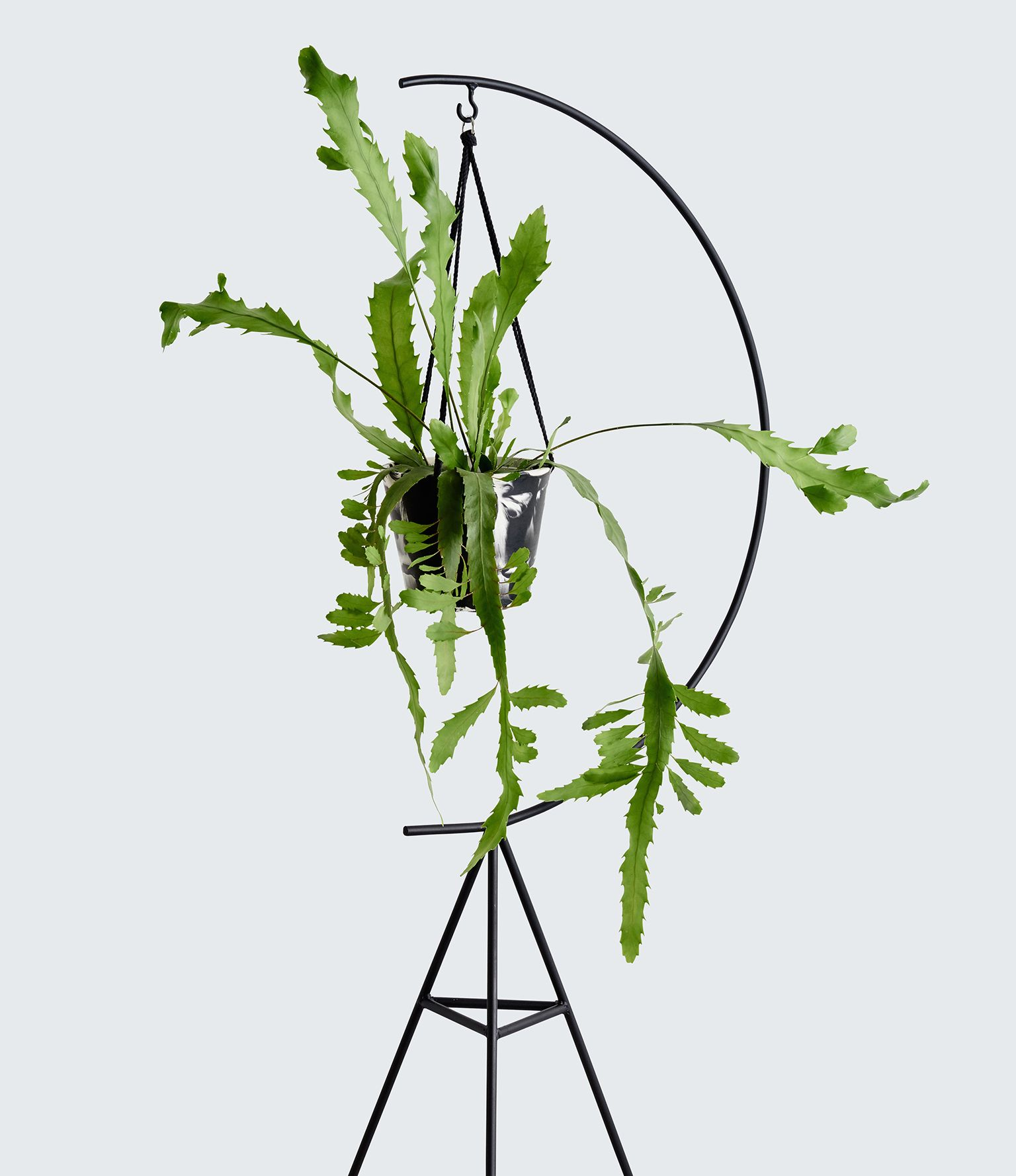 Capra Designs Crescent Plant Stand Is Made From Powder Coated
