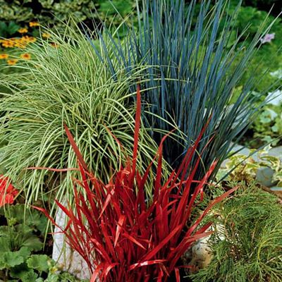 Vari t s vivaces d coratives en bordure massif et for Plante decorative jardin
