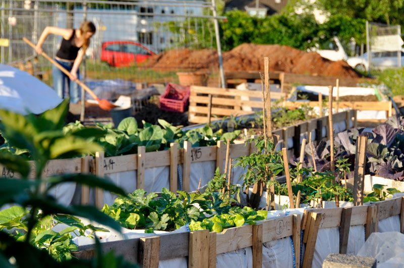 Urban Gardening Ideas Urban Gardening Pinterest Koln