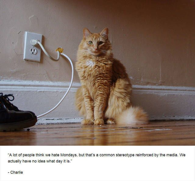 """By now, you've probably seen, if not at least heard of the popular blog, """"Humans of New York,"""" an eclectic hodgepodge of pictures and stories from various citizens of New York.But comedian Jim Tews saw one thing missing from it - cats. So naturally, he was led to create """"Felines of New York"""" - a comedic spoof in which cats share some honest thoughts about their pasts, future goals, and where they see themselves now."""