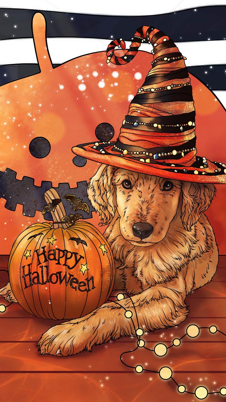 Fond d'écran chien, citrouille, chapeau, halloween. Fond