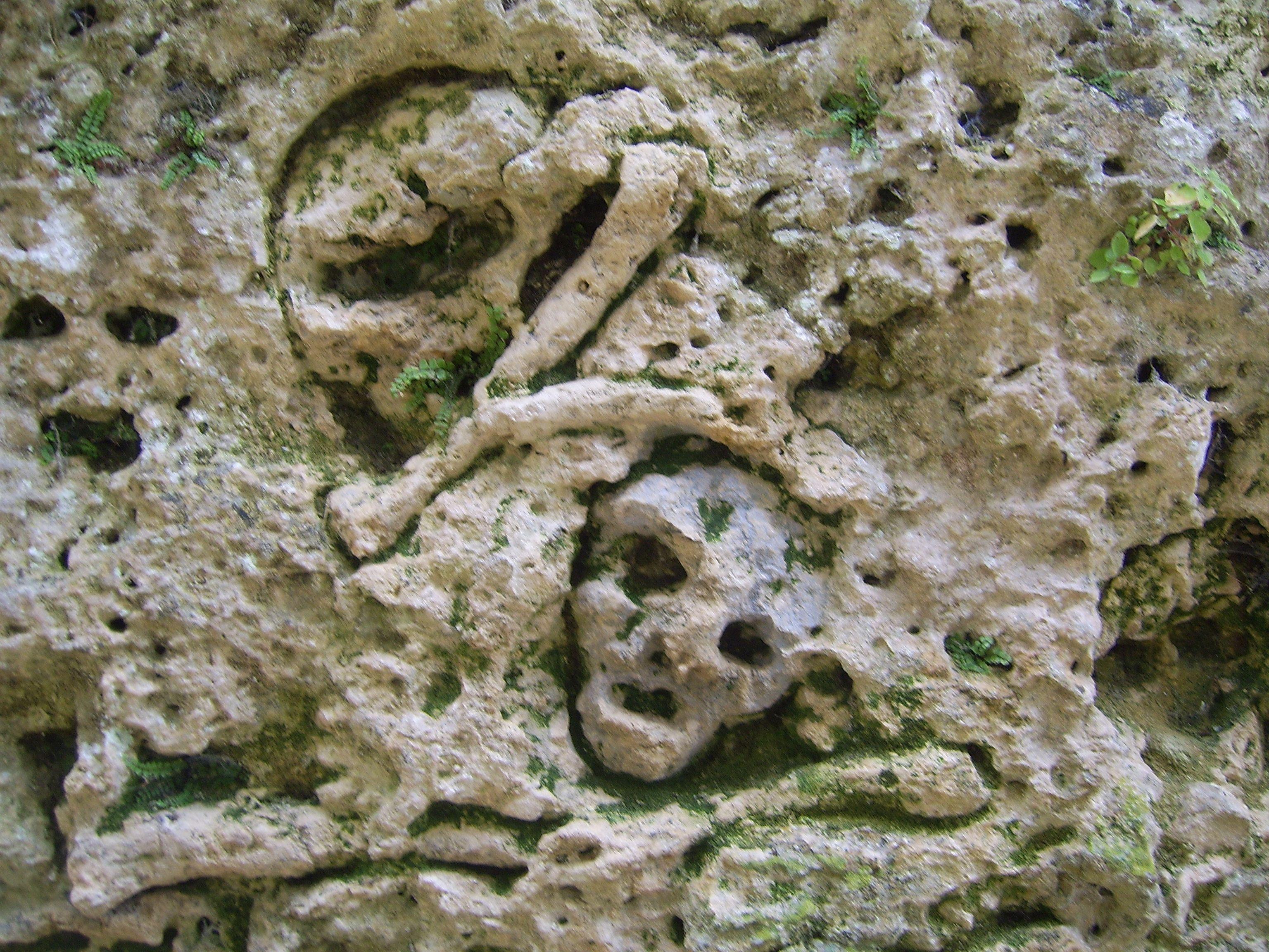 Ossements gravés dans le mur