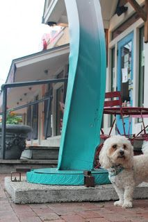 Best Dog Friendly Restaurants In San Antonio