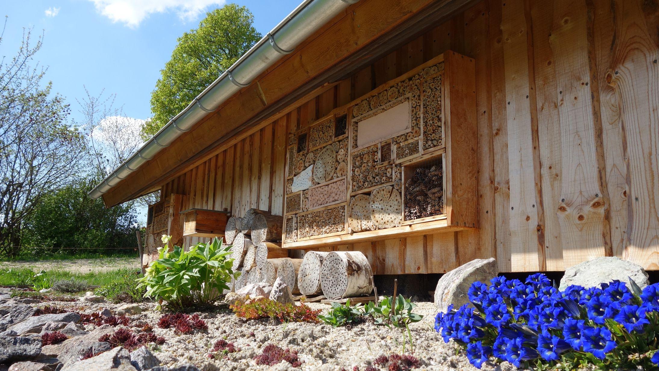 Ja so blau blau blau blüht der Enzian... hier bei uns im Erzgebirge. Hier mit unserem immer ausgebuchten (Insekten) Hotel. :-)