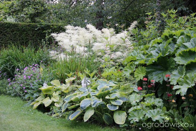 Galeria Zdjec Urocze Ogrody W Cieniu Ogrodowisko Beautiful Gardens Plants Garden
