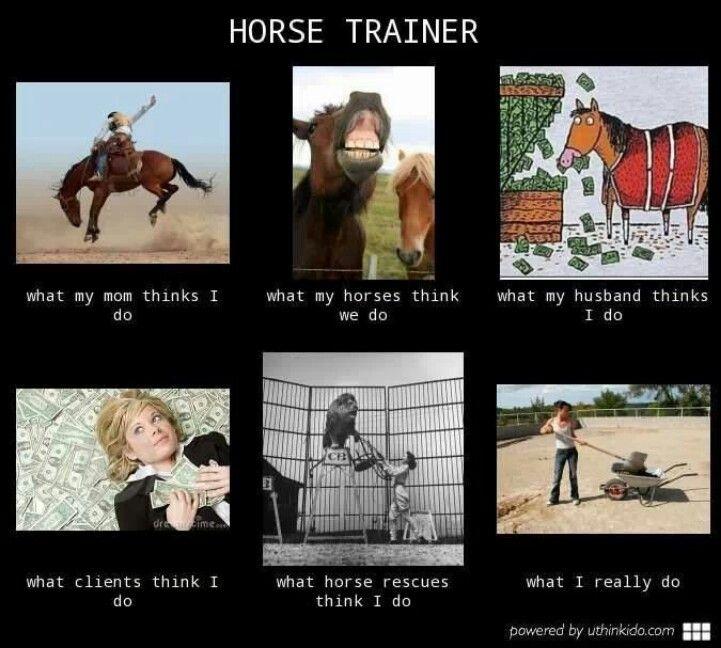 Horse Trainer Interpretations Funny Horse Memes Horse Riding Quotes Horse Jokes