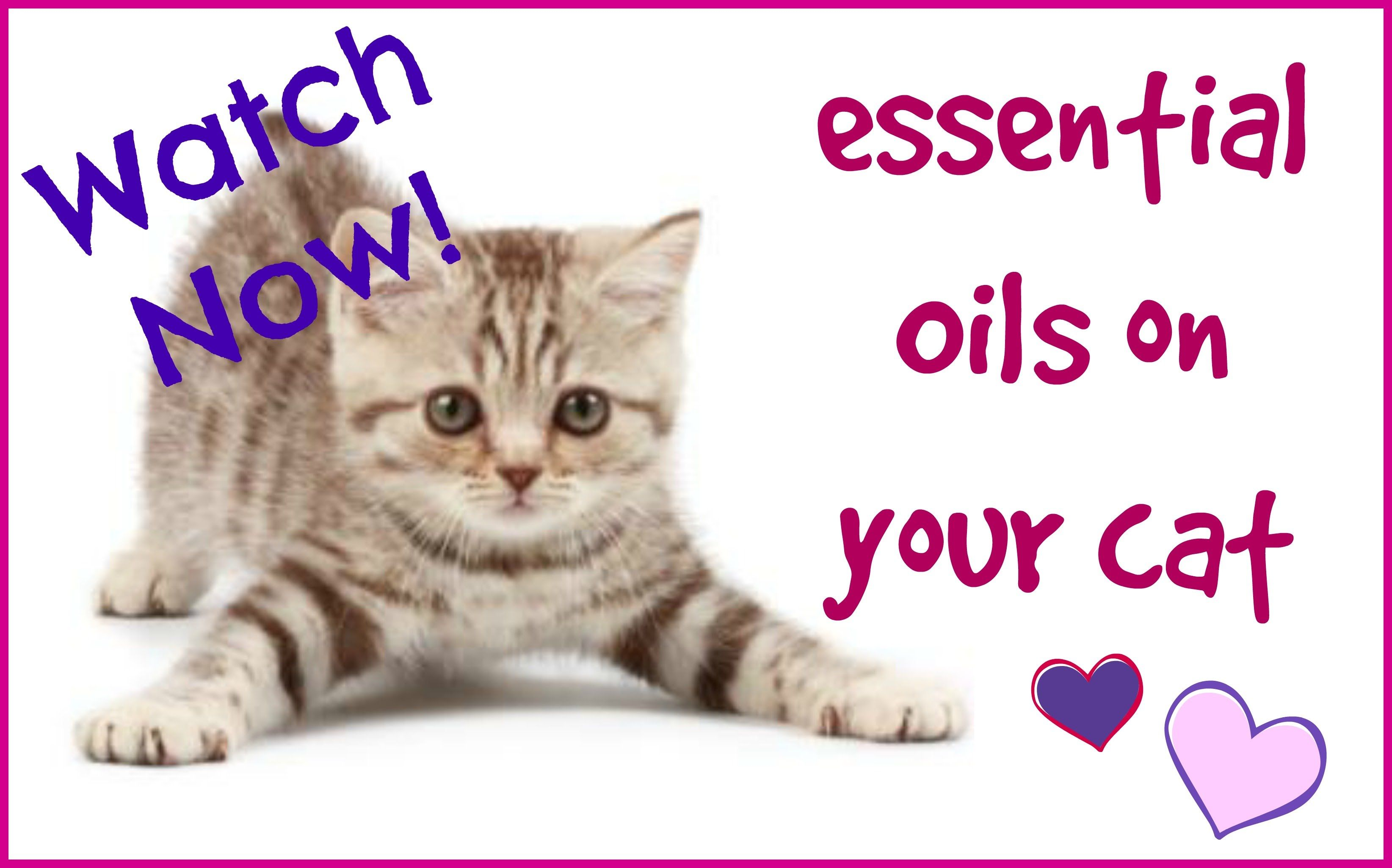 Essential Oils for Cats  Published on Apr 18, 2016