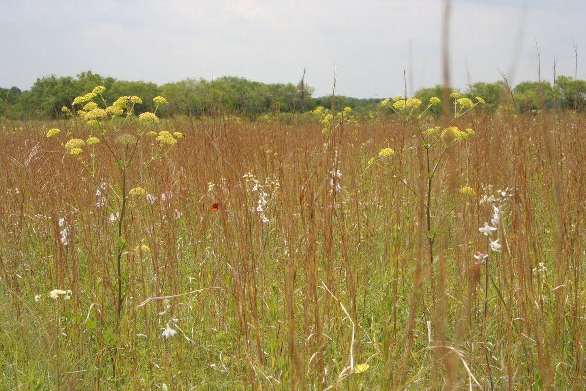 Native prairies association of texas prairie farmland