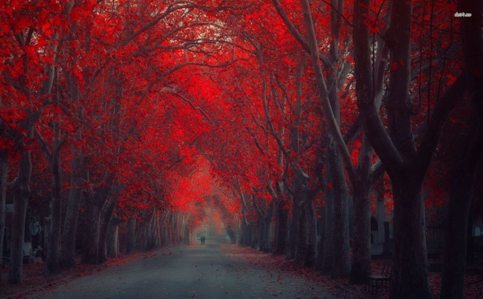 Walking Under The Red Autumn Trees HD Wallpaper