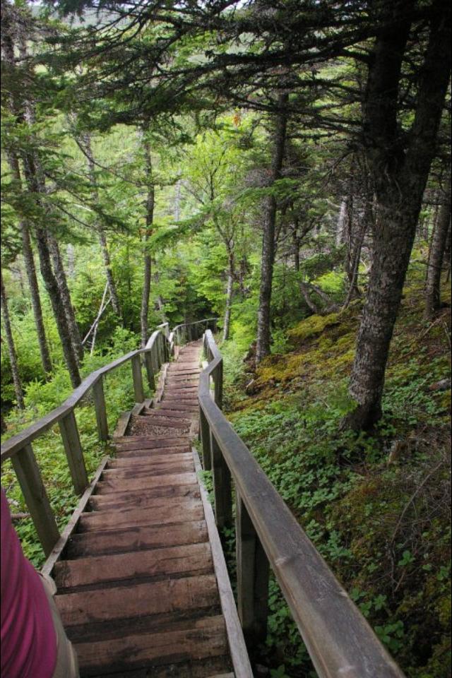 Trail in Gros Morne NP, Newfoundland, Canada
