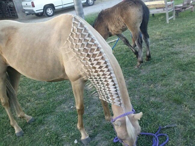 Hair Style For A Horse With A Very Long And Frizzy Mane Description From Pinterest Com I Searched For This On Bing Com Horse Braiding Horses Beautiful Horses