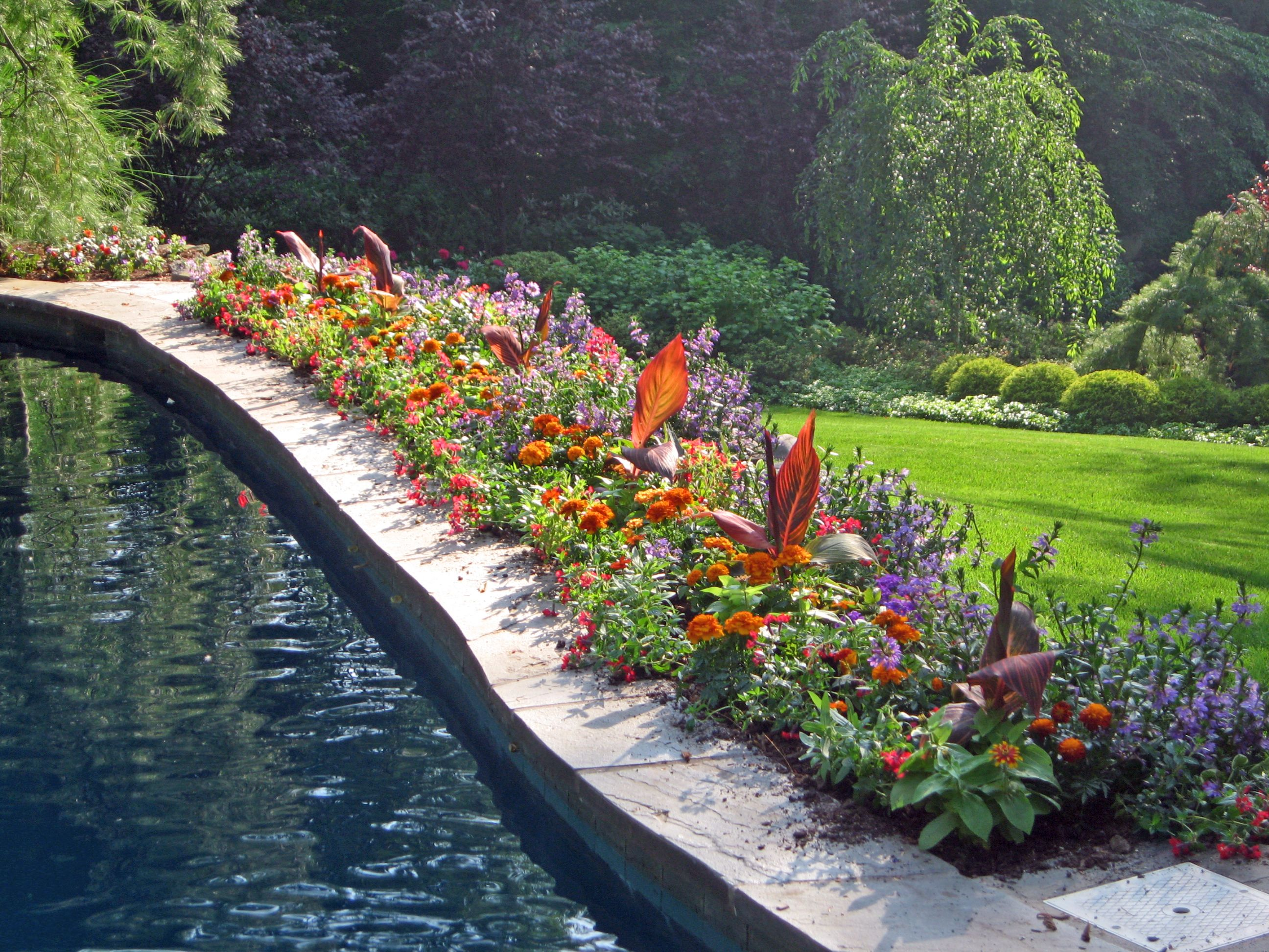 Poolside planting beautiful summatime my favorite for Garden near pool