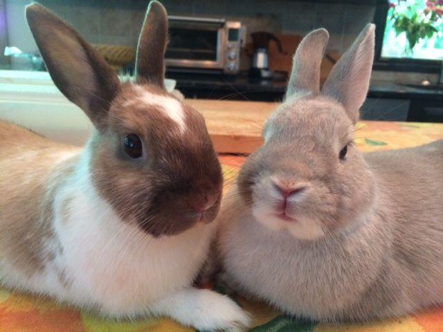Pet Rabbit Outdoor