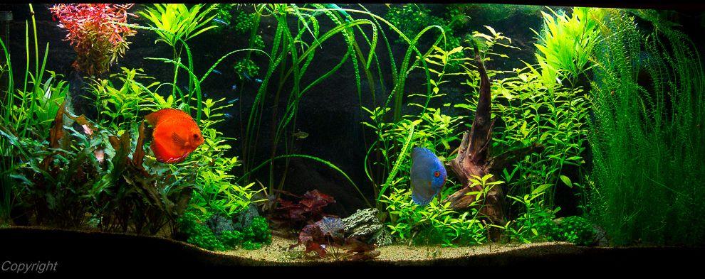 img aquariums discus aquarium and aquarium fish tank. Black Bedroom Furniture Sets. Home Design Ideas
