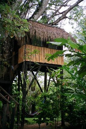 Tropical Paradise Hotel In Caye Caulker, Belize. Editorial ...  |Belize Treehouse Accommodation Near Beach