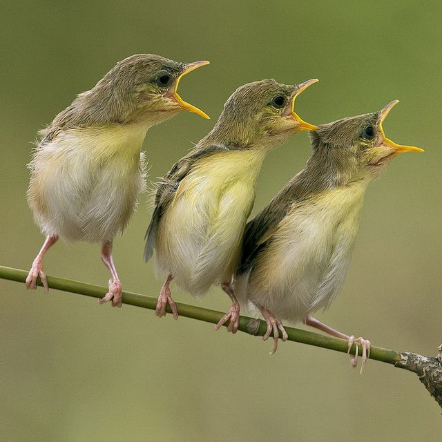 Trio Wild Birds Pet Birds Pretty Birds