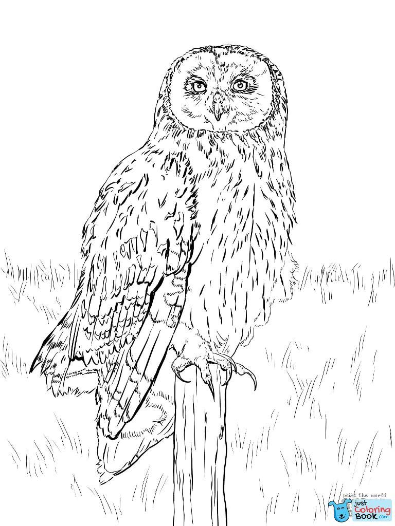 Free Printable Bengalese Eagle Owl Coloring Pages