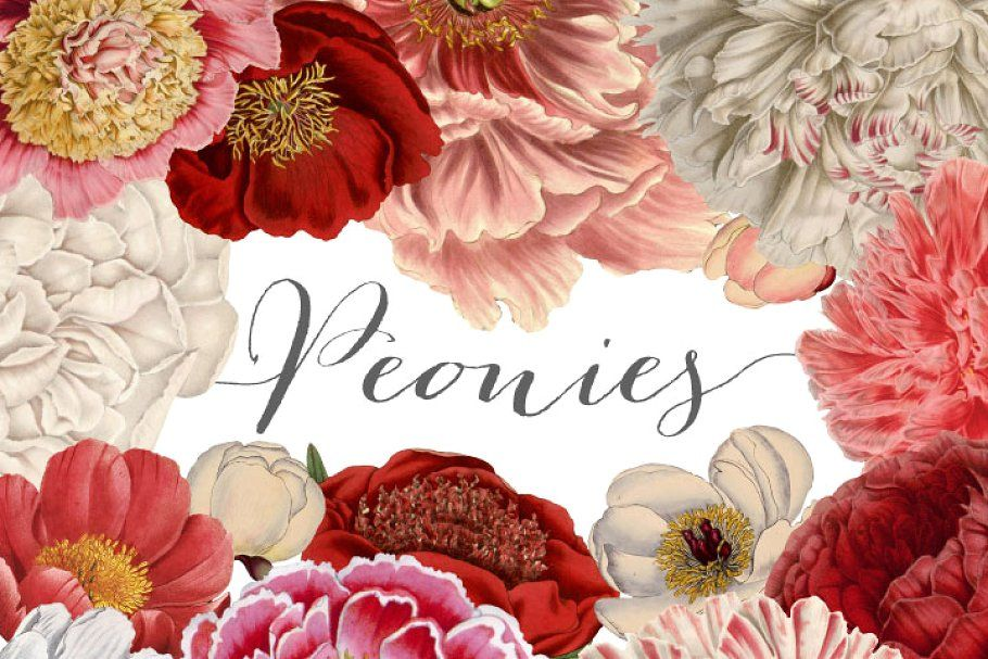 Vintage Peonies clipart and brushes Flower illustration