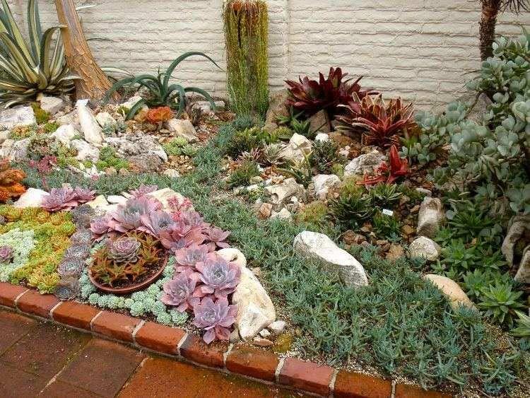 les plantes grasses extrieur sadaptent tous les types damnagement extrieur - Les Plantes Grasses D Exterieur