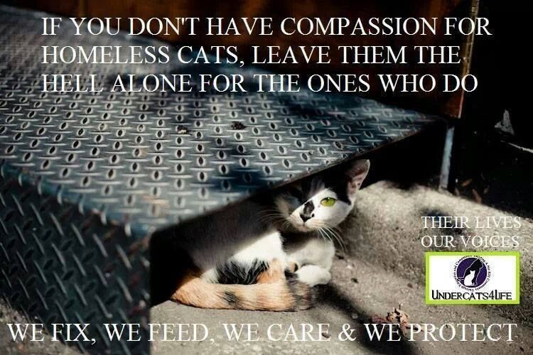 Thank You for Caring ♥♥ Feral cats, Crazy cats