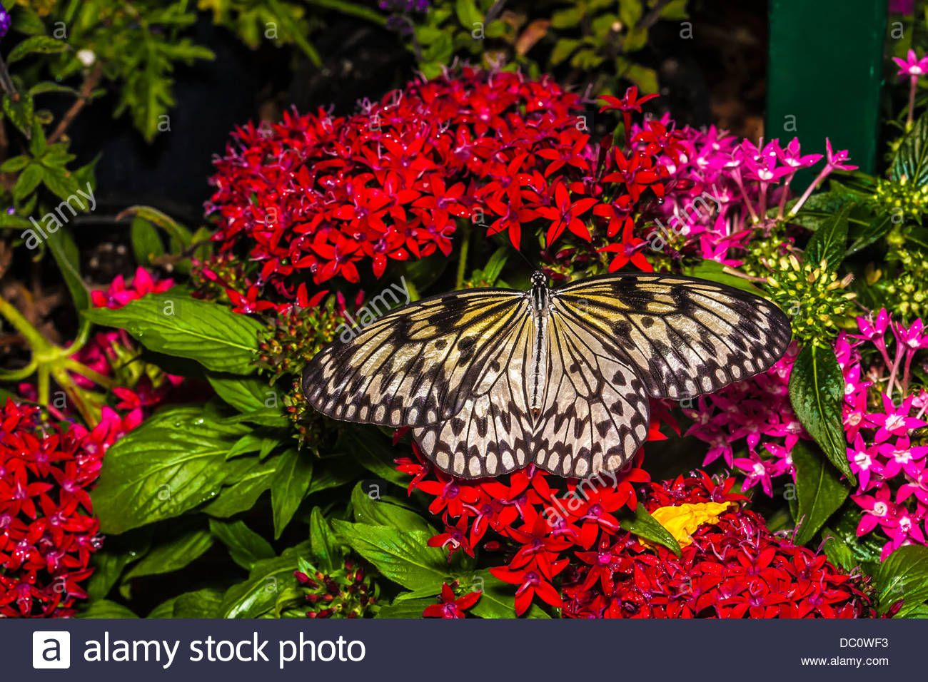 Image result for butterflies and pink flowers