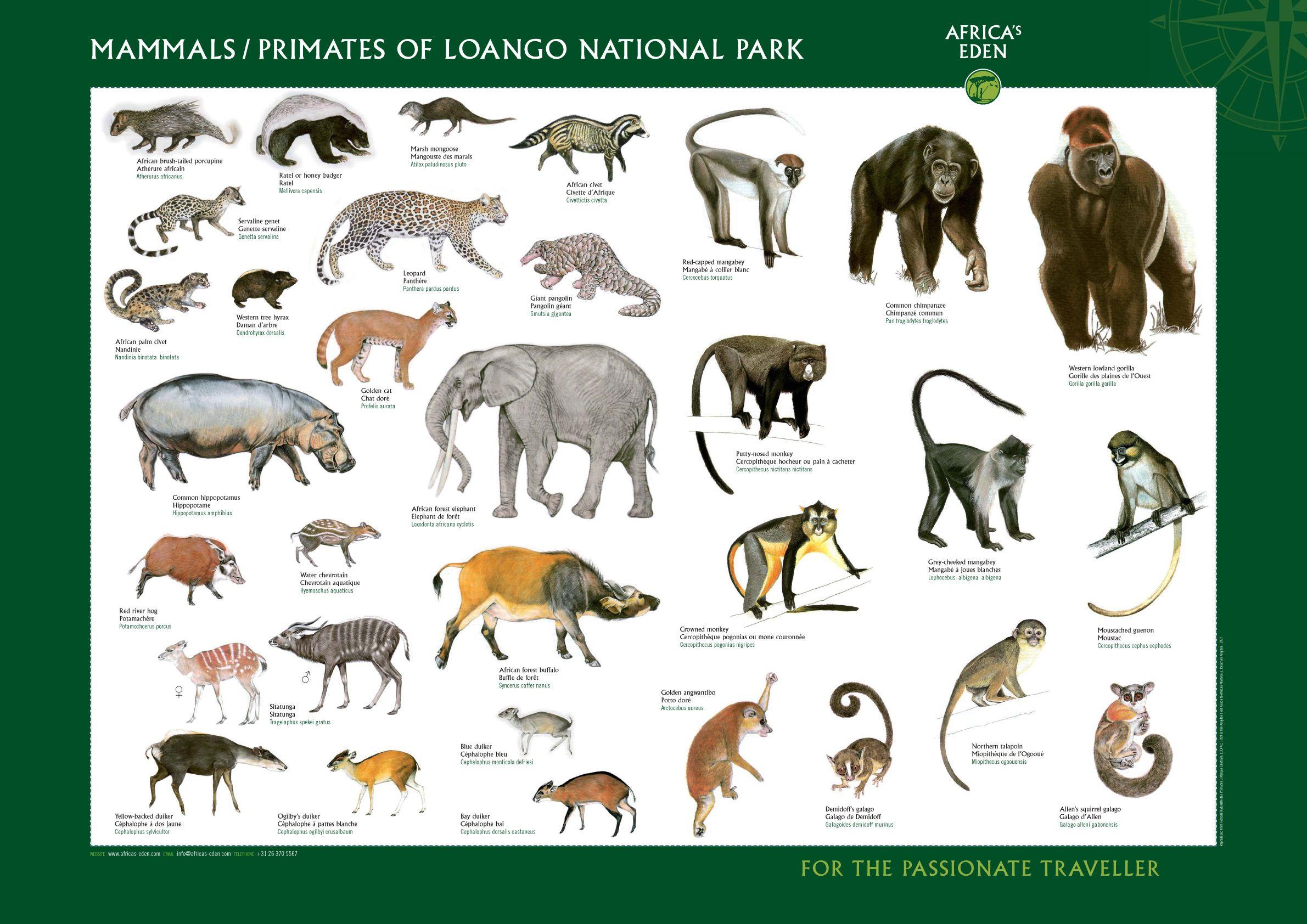 Africas Eden poster mammals big.jpg (2381×1684) Wild