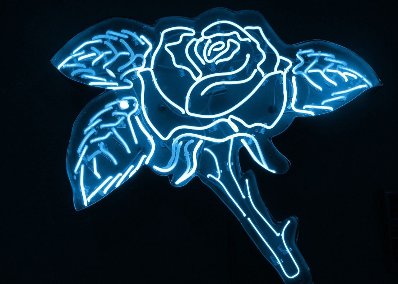 Blue rose. in 2020 Light blue aesthetic, Blue aesthetic