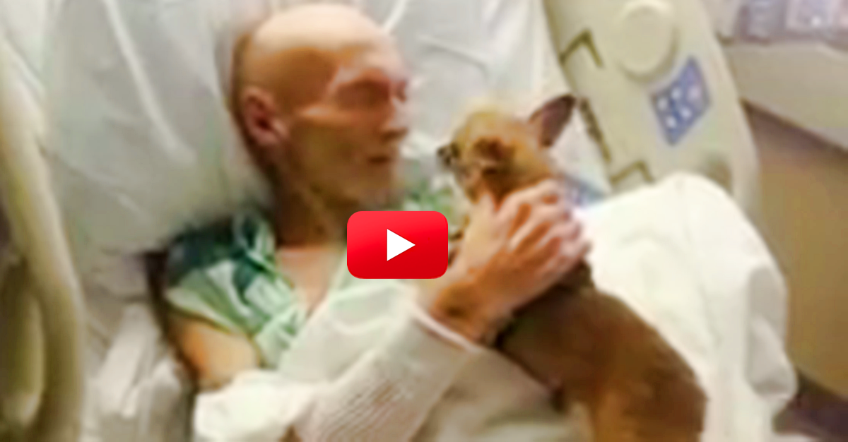 This Hospital Threw Out Their No-Pet Policy For One Day To Allow A Dying Man To See His Dog, And What Happens Next Is So Amazing! | The Animal Rescue Site Blog