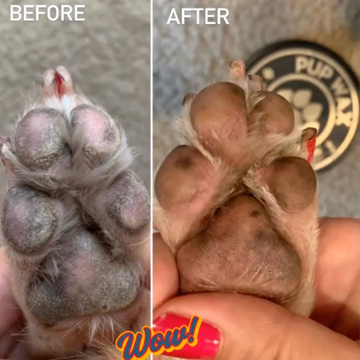 Organic Healing Balms For Dry Dog Paws In 2020 Cracked Dog Paws Dry Paws Dry Dog Paws
