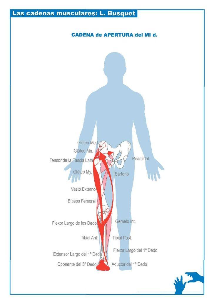 Esquemas Cadenas Musculares Hijama Cupping Anatomy