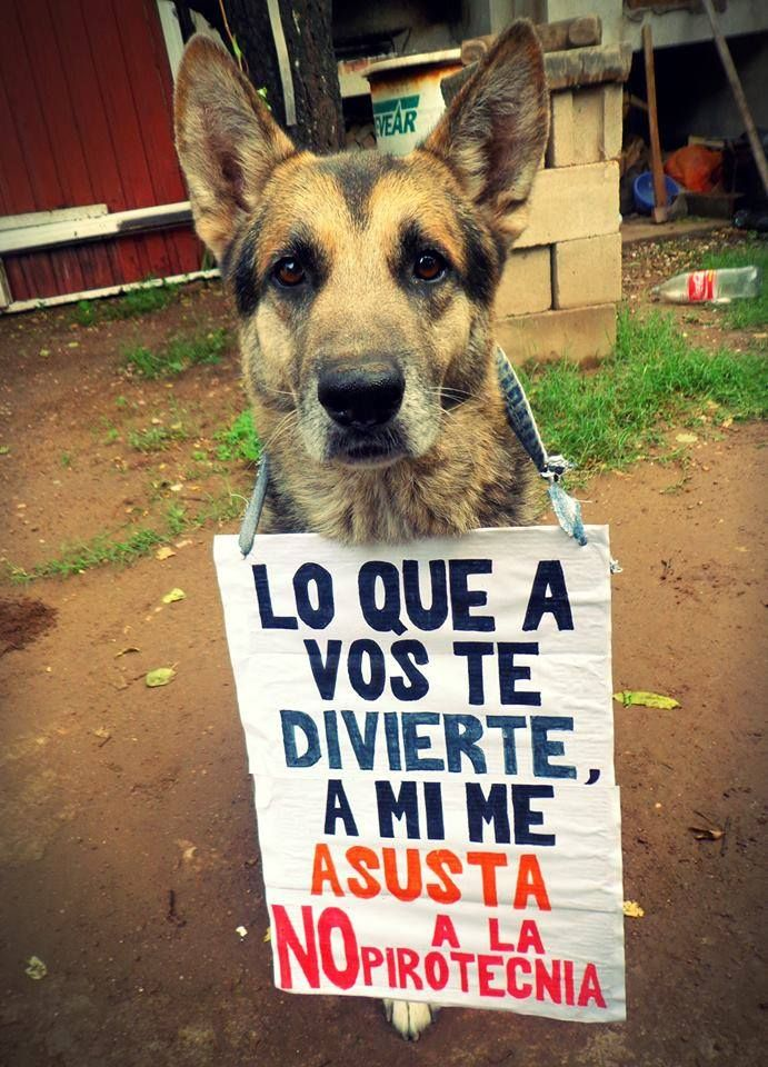 Lo Que A Vos Te Divierte A Mi Me Asusta No A La Pirotecnia Perros Mascotas Cuidar Animales Humor De Animal Mascotas Frases