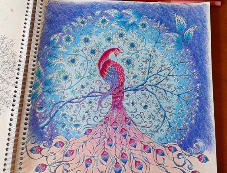 Johanna Basford Coloring Book Peacock Secret Garden Pavao Jardim Secreto