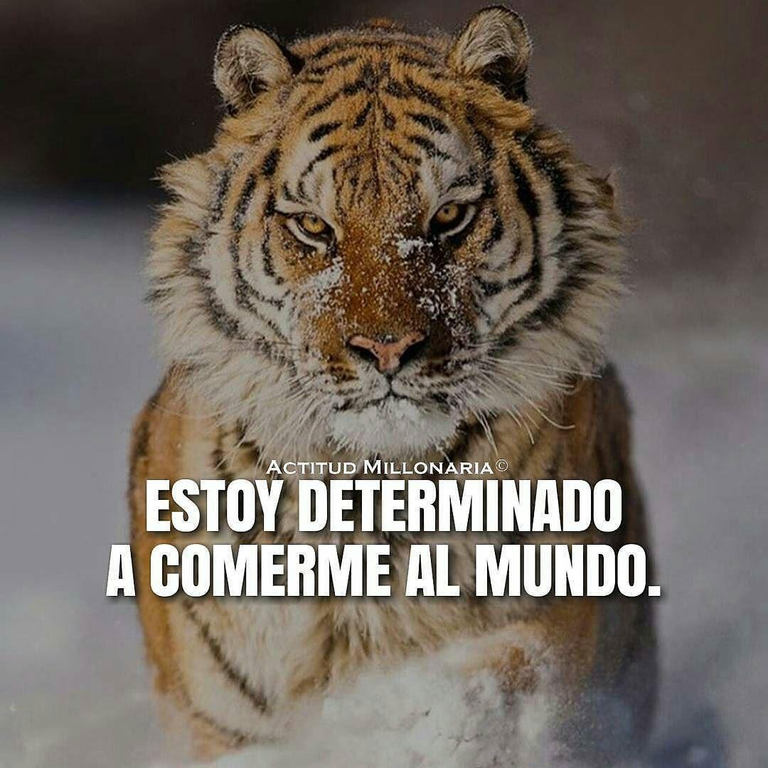 Feliz noche y #felizfindesemana   @Regrann from @actitudmillonaria -  Voy determinado a conquistar al mundo.. #ActitudMillonaria  - #regrann