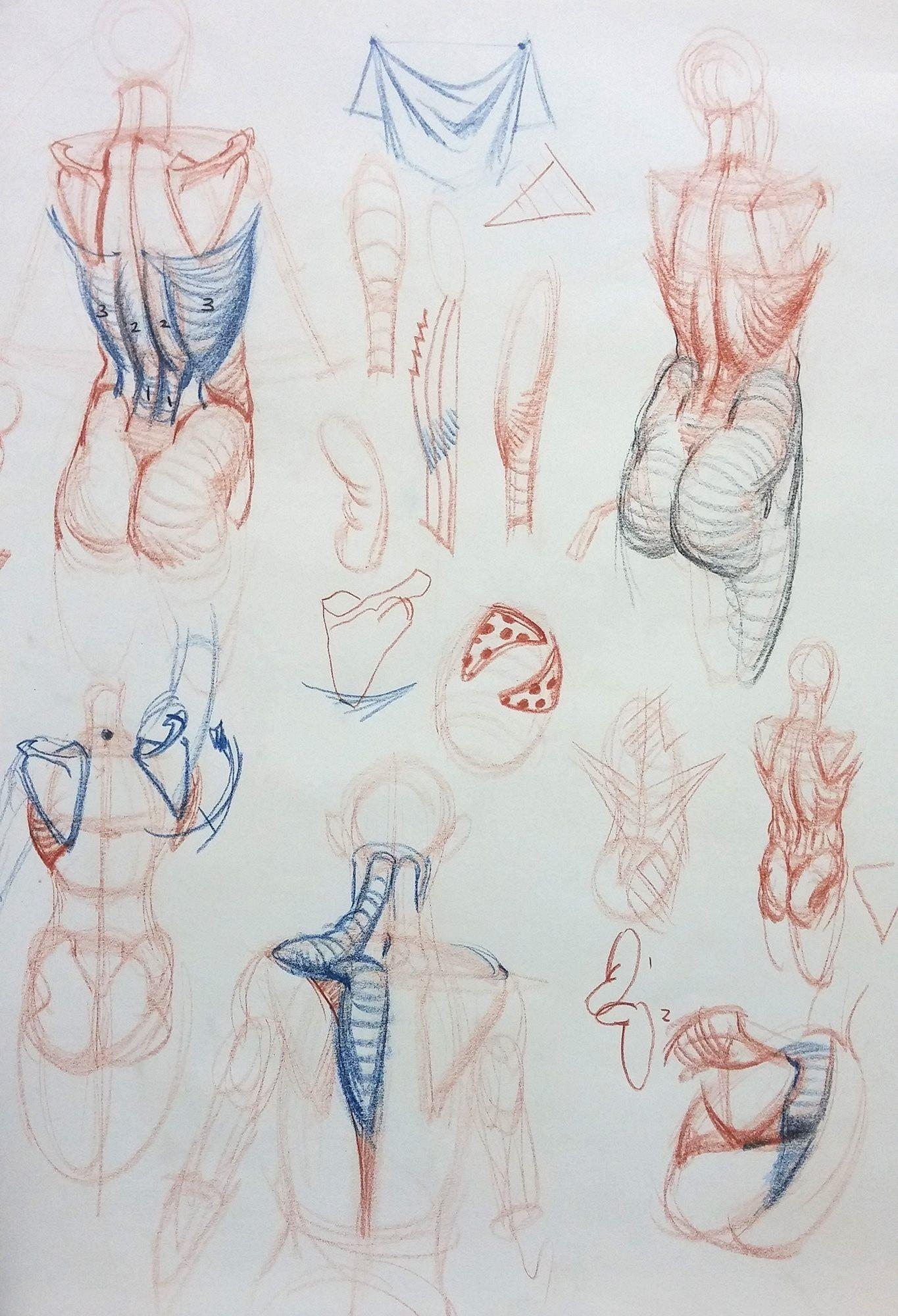 Pin von pau auf Study | Pinterest | Anatomie, Akt und Zeichnen