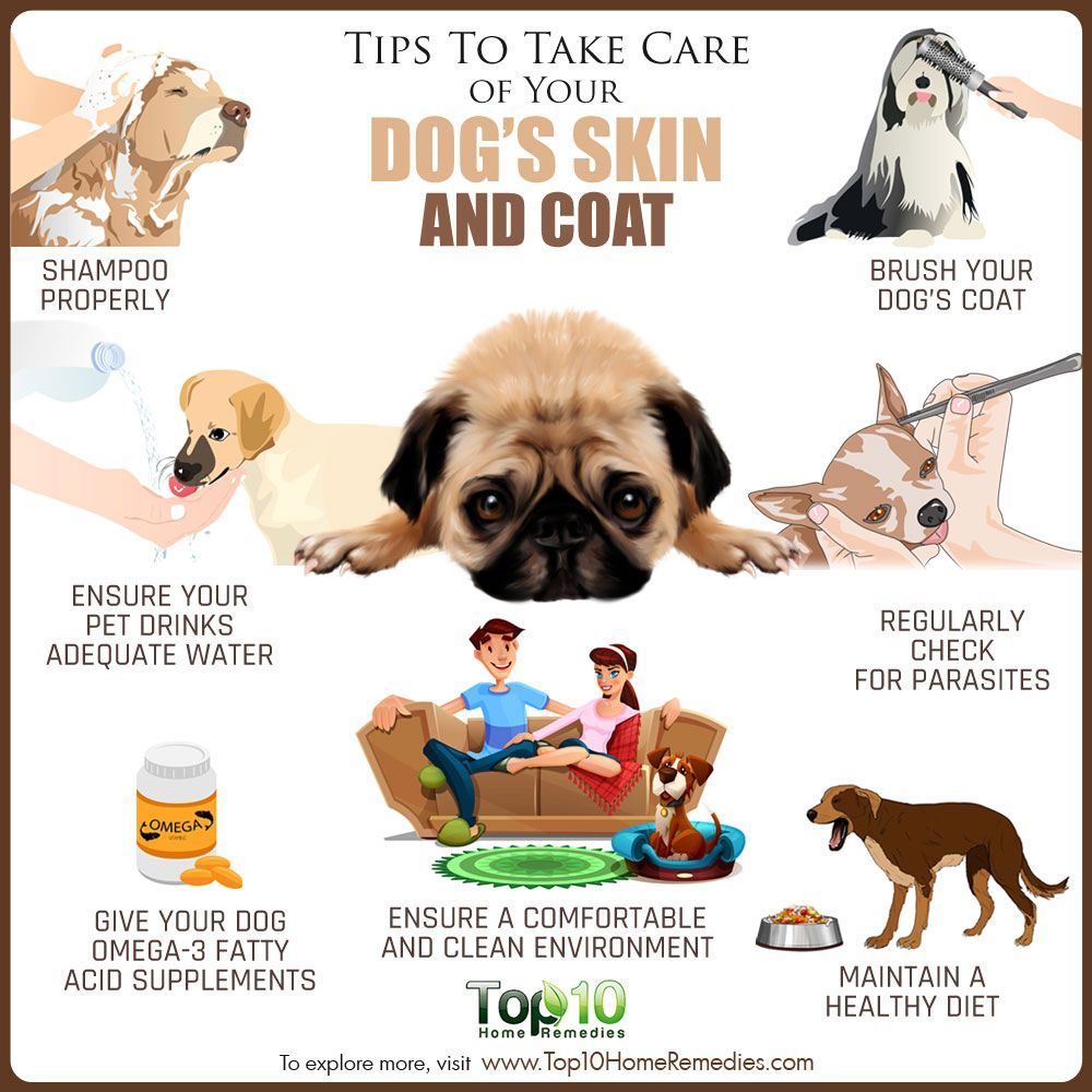 Tips To Take Care Of Your Dog S Skin And Coat Top 10 Home Remedies Dog Skin Your Dog Puppy Care
