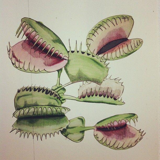 Pin By Patrick Snider On Art Trap Art Carnivorous Plants Venus Fly Trap