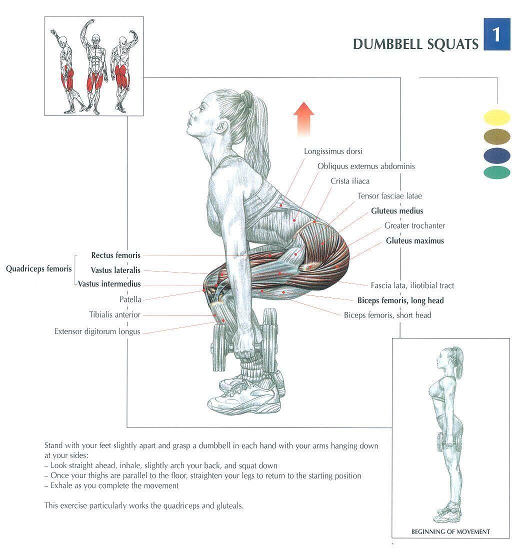Pin de Yumiko Ichikawa en Anatomy | Pinterest | Ejercicios, Rutinas ...