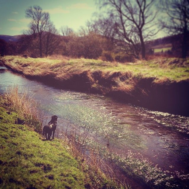 Come on Scotland- we need more of these days #countryside #scotland #river #walkies #beautifulday #sunny #hurryupsummer #nature #touserv #jj_nature